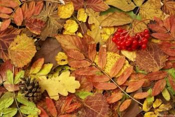 Шерхливий ранок благодатної осені