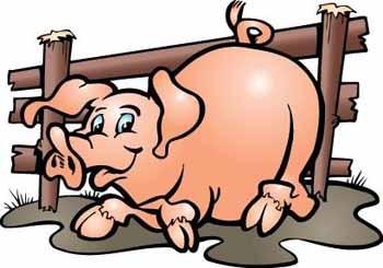 Вихваляється свиня