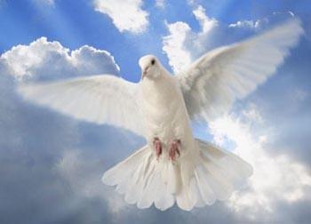 Летіла голубка