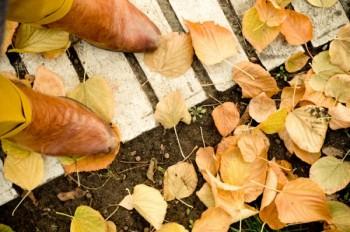 Крізь осінь в зиму - до весни…