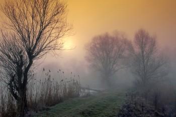 Світанковий туманний щем