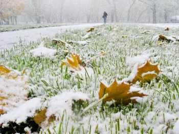 Розливи сніжних солов'їв