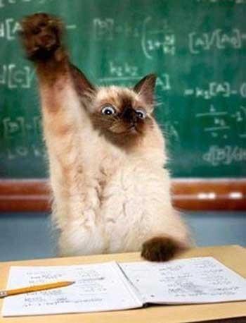 Кіт школяр