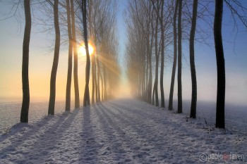 Туману ніжний мотив