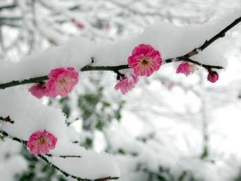 Зимова ностальгія