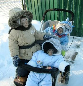 Мавпяча родина