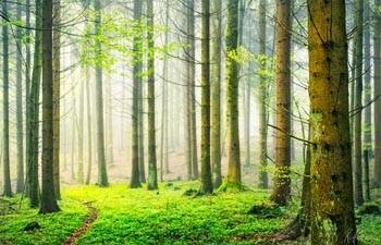 Мій любий ліс
