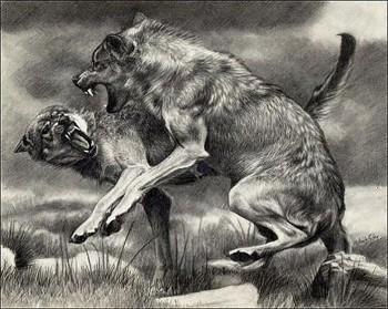 Вовки скаженіють