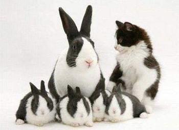 Котячі залицяння