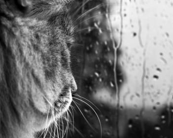 Я… мій дощ… і моя кішка