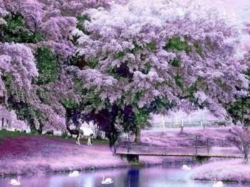 Бузковий сад