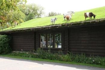 Навіжені кози