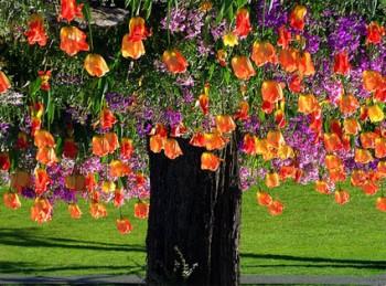 Небо в квітах...