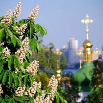 Україна в каштанів цвітінні