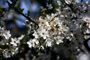 Весняний передзвін