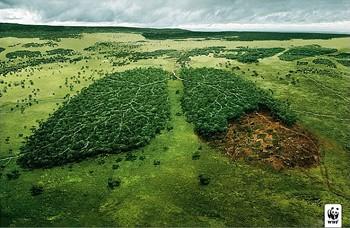 Гублять ліс