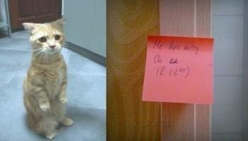 Кіт недавно їв