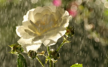 Красивий дощ