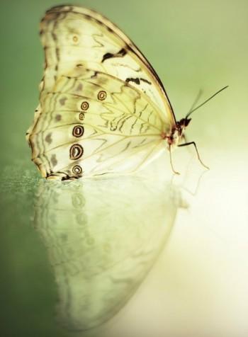Метелик і квітка ліхтаря