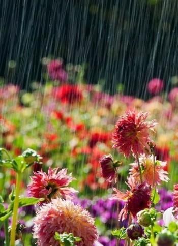 Вранці дощ наполохала