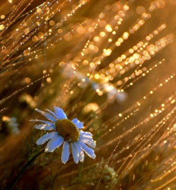 Сходить літо світанками в роси