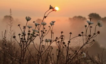 Літечка осінні пелюстки