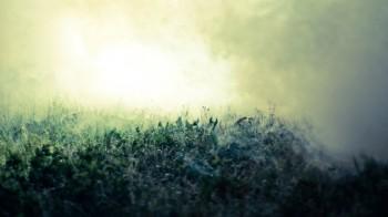 Танка зеленавих туманів