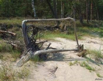 Квадратний корінь
