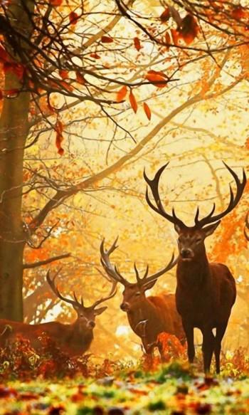 Про оленів осінньої наснаги