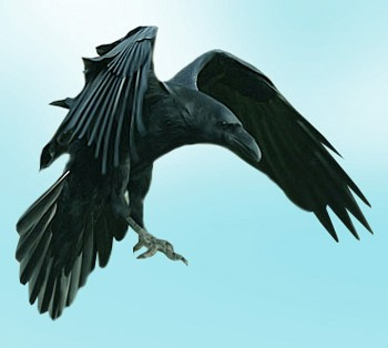 Летів ворон