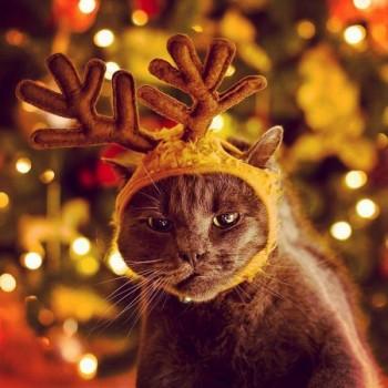 """""""Нейолка"""" або """"Чим укріп не різдвяне дерево?"""""""
