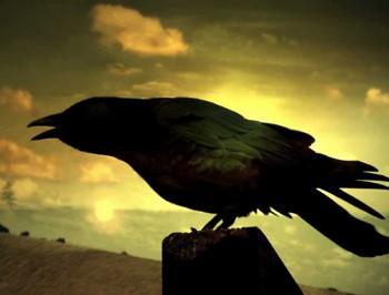 Кружляв ворон чорний