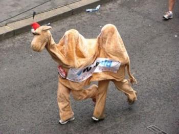 Танець двогорбого верблюда