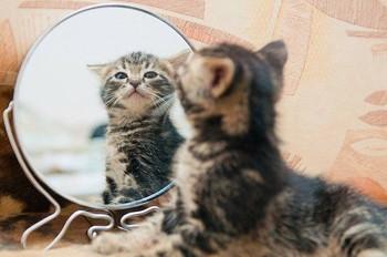 Киця і дзеркало