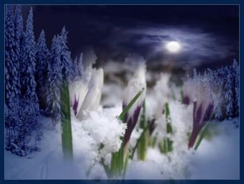 Невинний ноктюрн весноцвіту