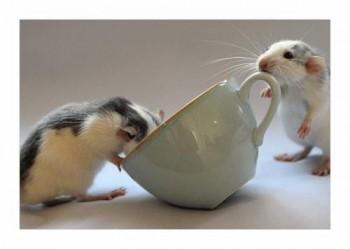 Чашка весняної кави