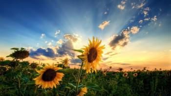 Роздуми про захід сонця