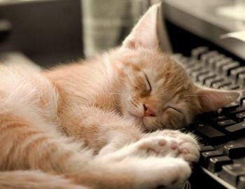 Котик спить