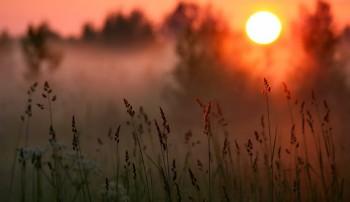 Танка в шепоті трав