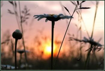 Сни трав'яного колосся