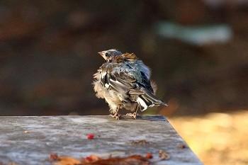 Больная птичка