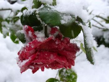 Червоним на снігу