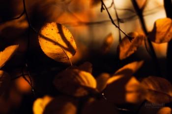 Сум'яття осіннього листя