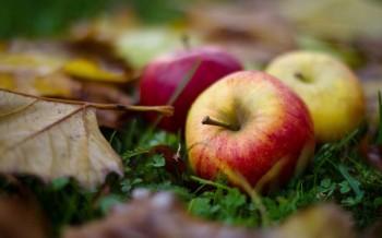 Осінні яблука