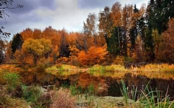 В тенетах лісу загубилась осінь
