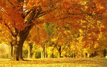 Поважна осінь