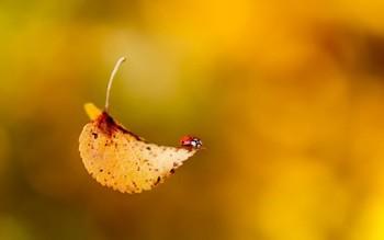 Ой летів листочок