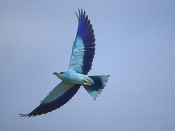 Лети до краю,  птахо вільна!