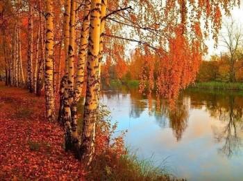 За що я люблю осінь?