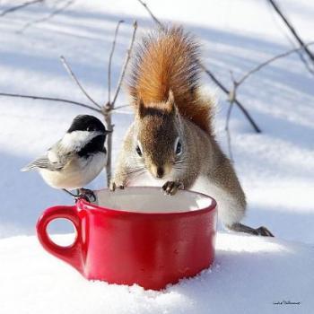 Закликаємо сніжок